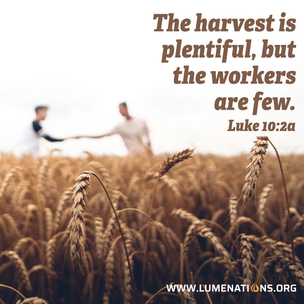 Harvest2019.001.jpeg