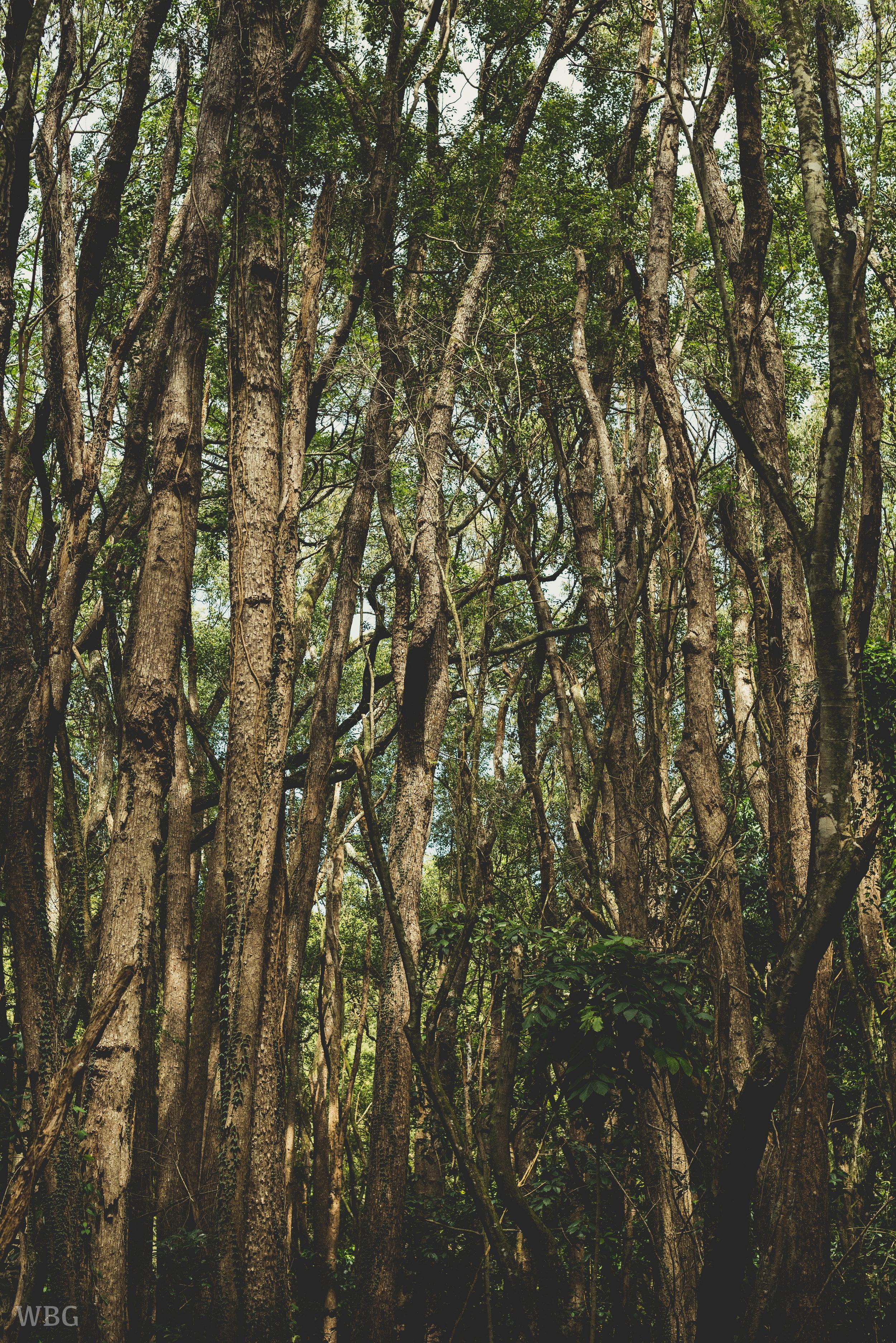 TREE MESS.jpg