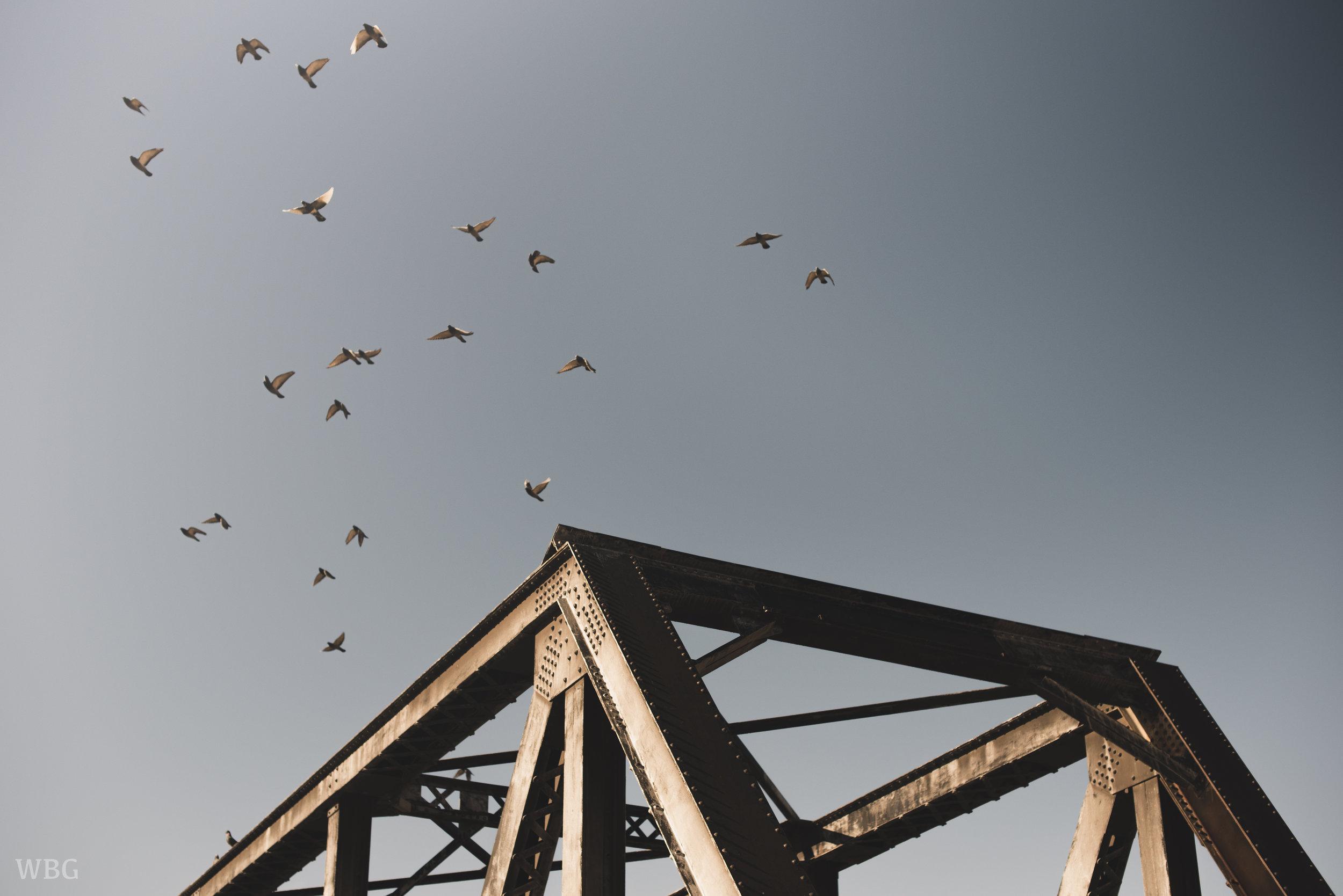 BIRDS CHERRY BRIDGE.jpg