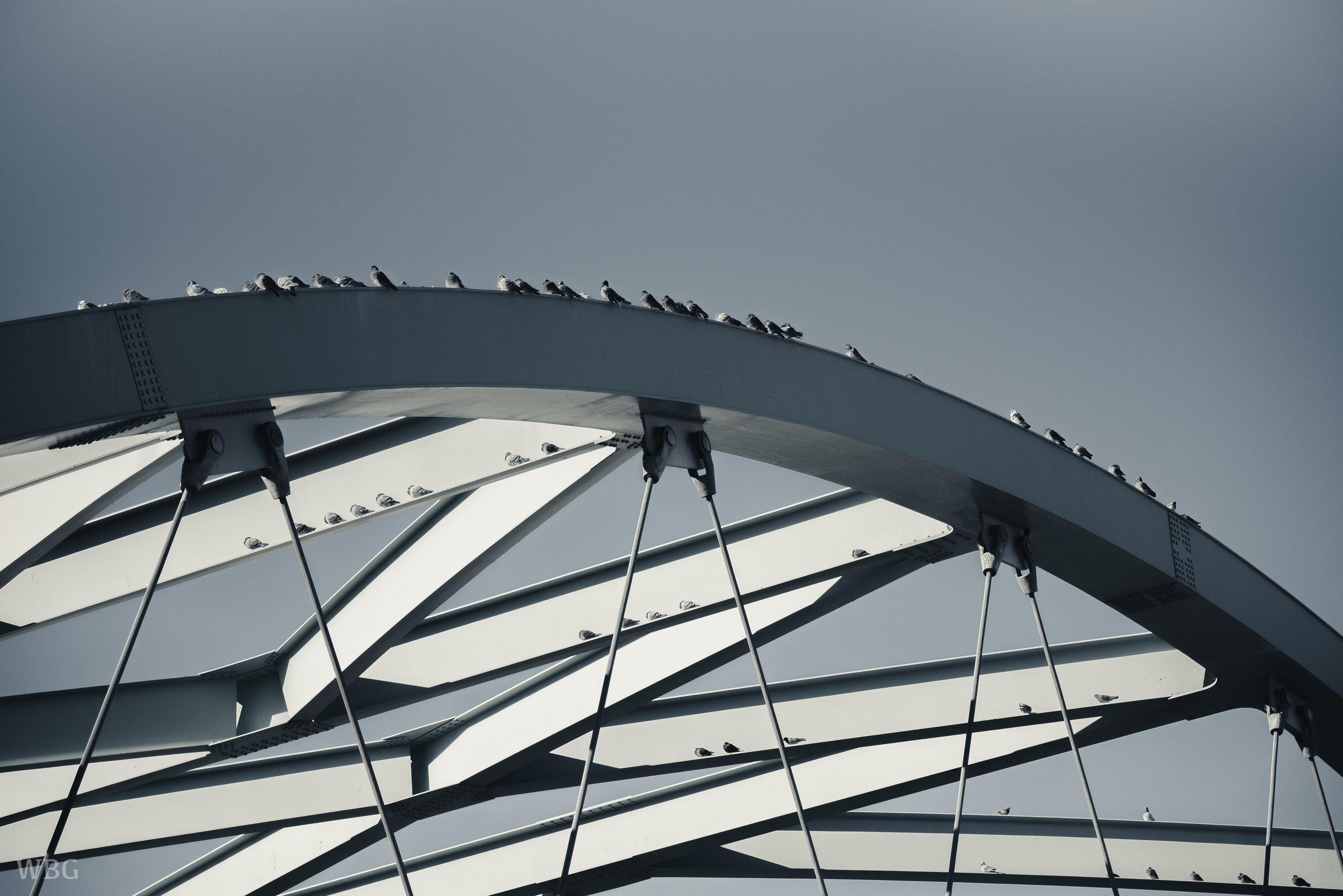 BIRDS ON CONFLUENCE.jpg