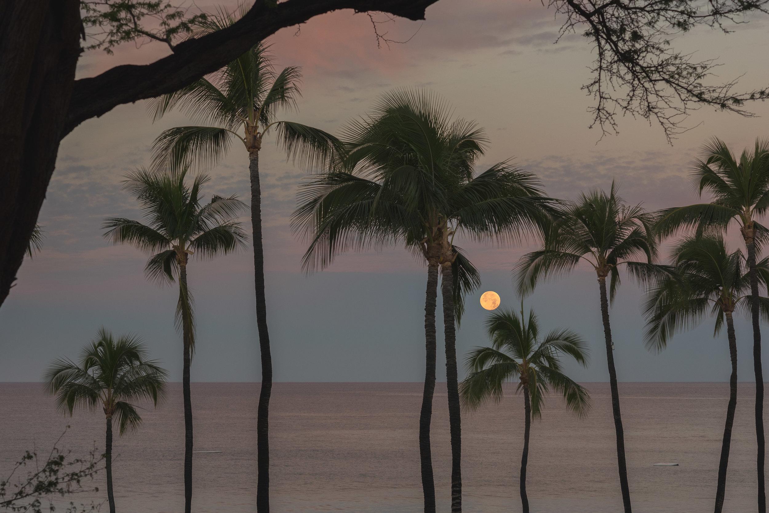 Red Moon Morning 1.31.18.jpg
