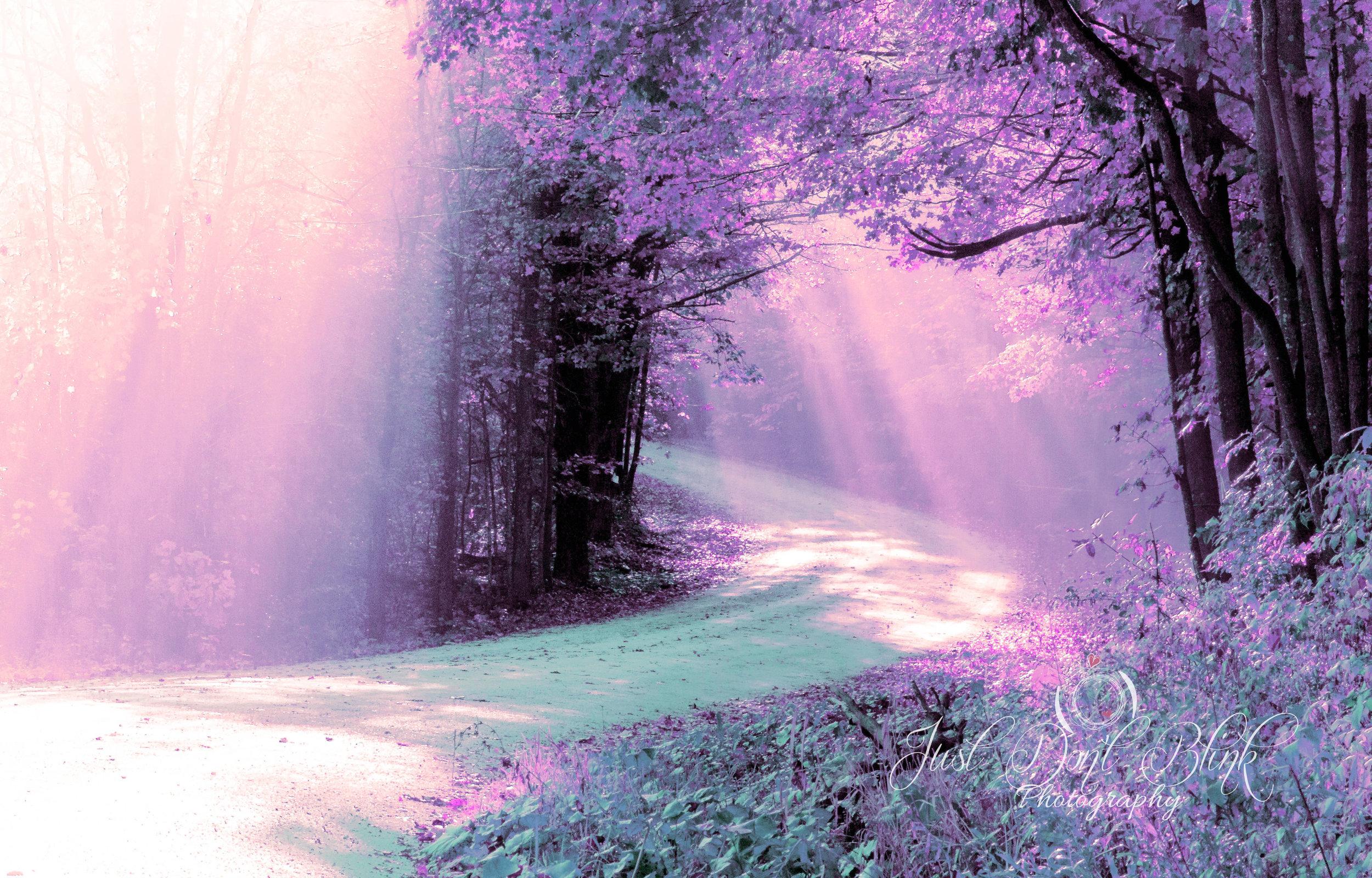 woodsblueviolet.jpg