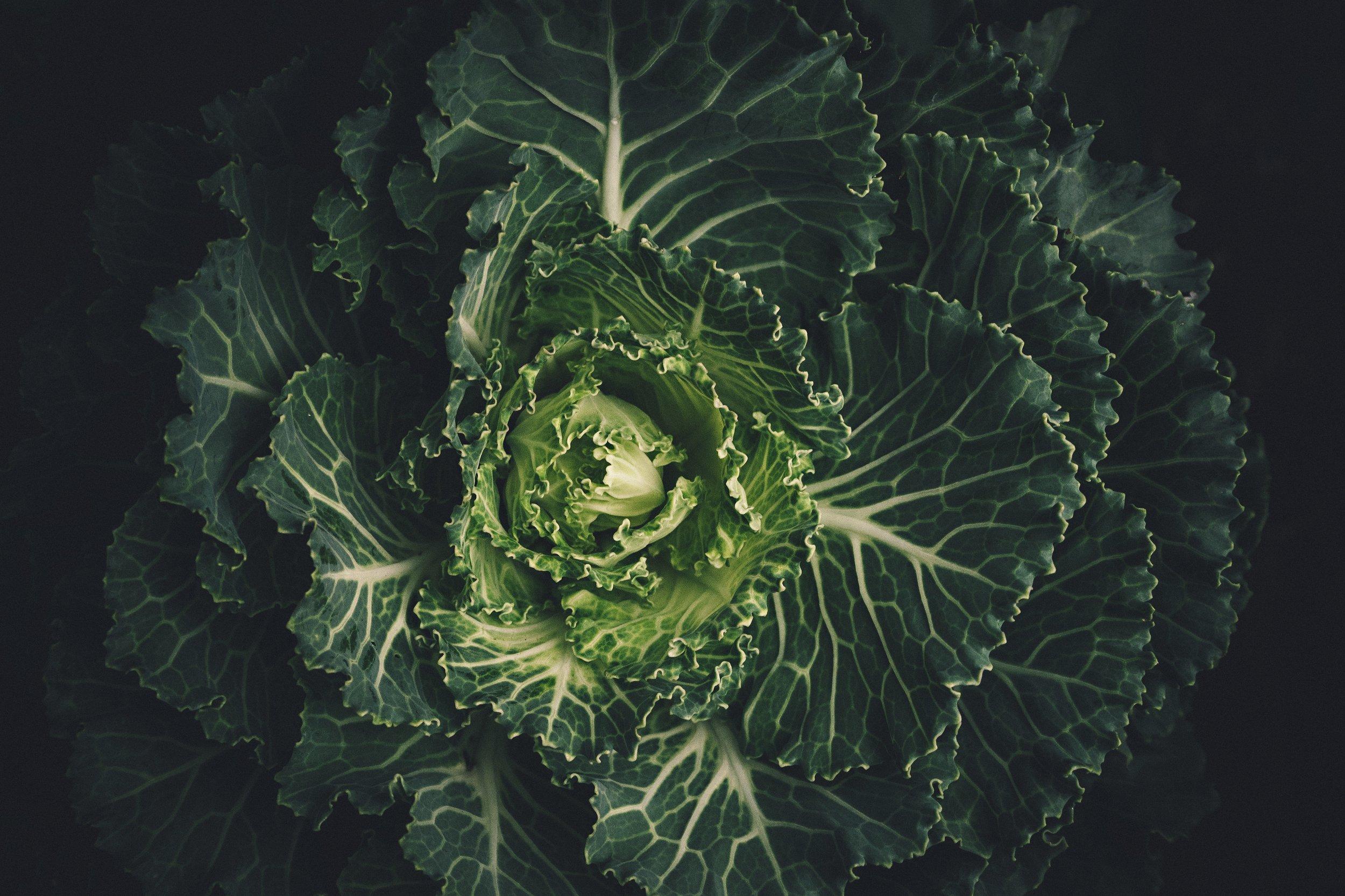 cabbage-leaves-lettuce-212932.jpg
