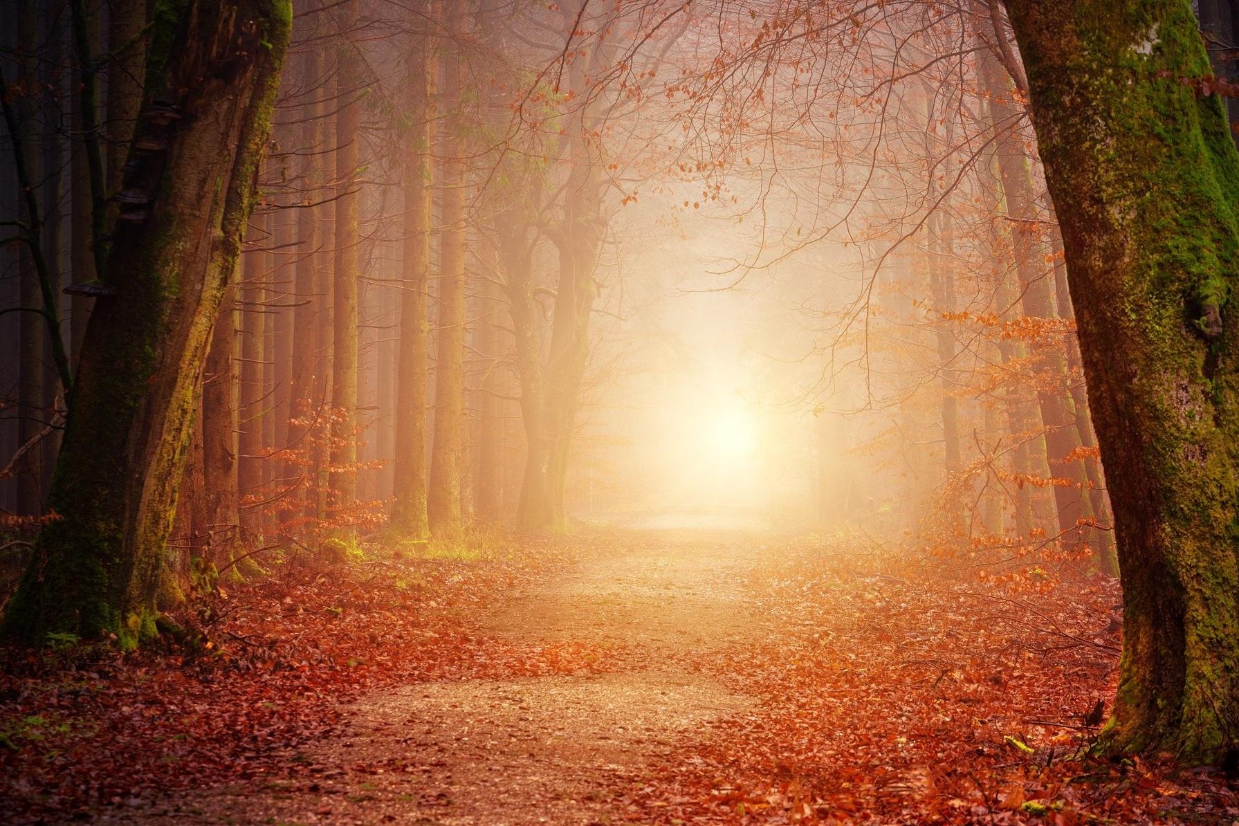 path.jpg