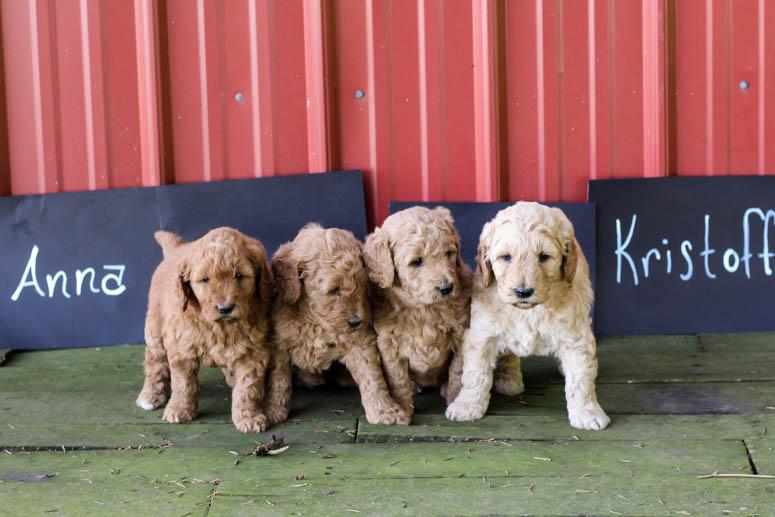 May 22, 2018 Puppies - 4 Weeks 110.jpg