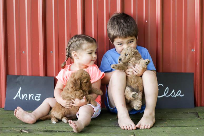 May 22, 2018-Puppy Anna & Elsa 4 wk-001.jpg