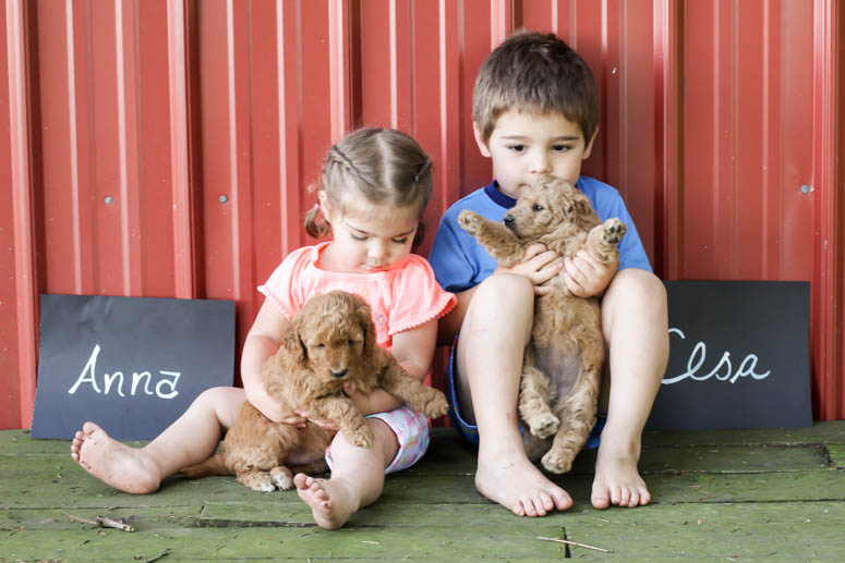 May 22, 2018-Puppy Anna & Elsa 4 wk-002.jpg