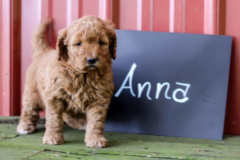 May 22, 2018-Puppy Anna 4 wk-002.jpg