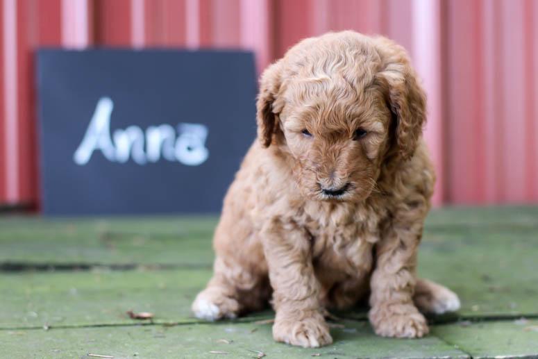 May 22, 2018-Puppy Anna 4 wk-003.jpg