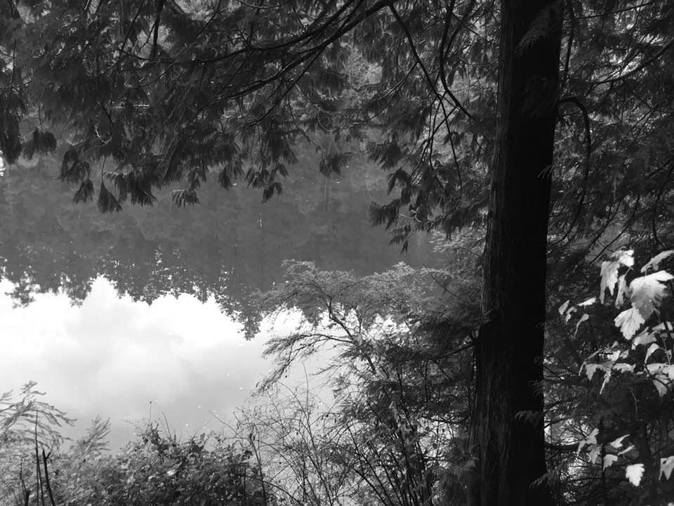 stillforest.jpg
