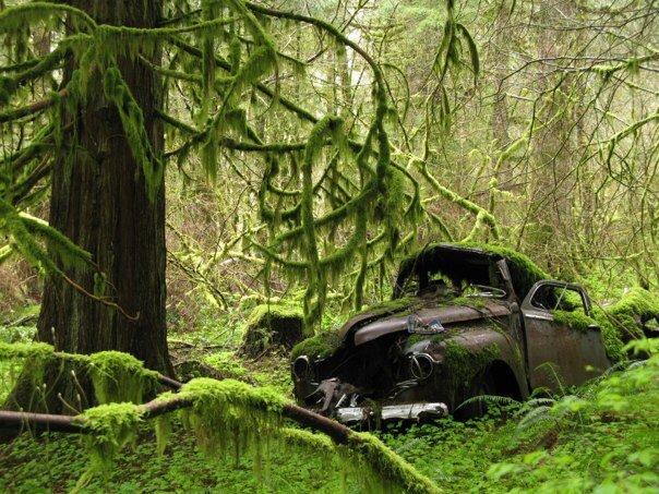 rainforest car.jpg