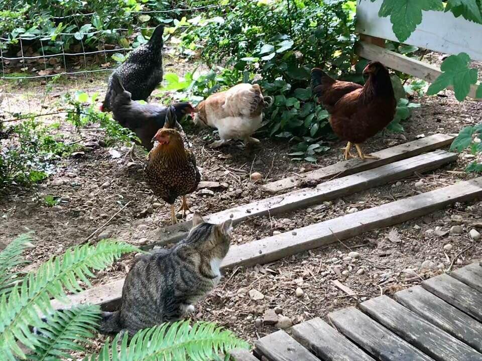 catandbirds.jpg