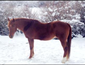 Boone - adopted Feb. 2, 2015