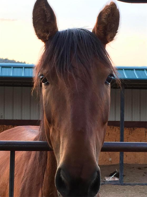 Gabi - adopted Oct. 1, 2017