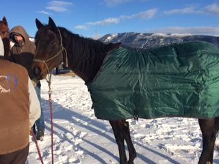 Breezie - Adopted December 1, 2017