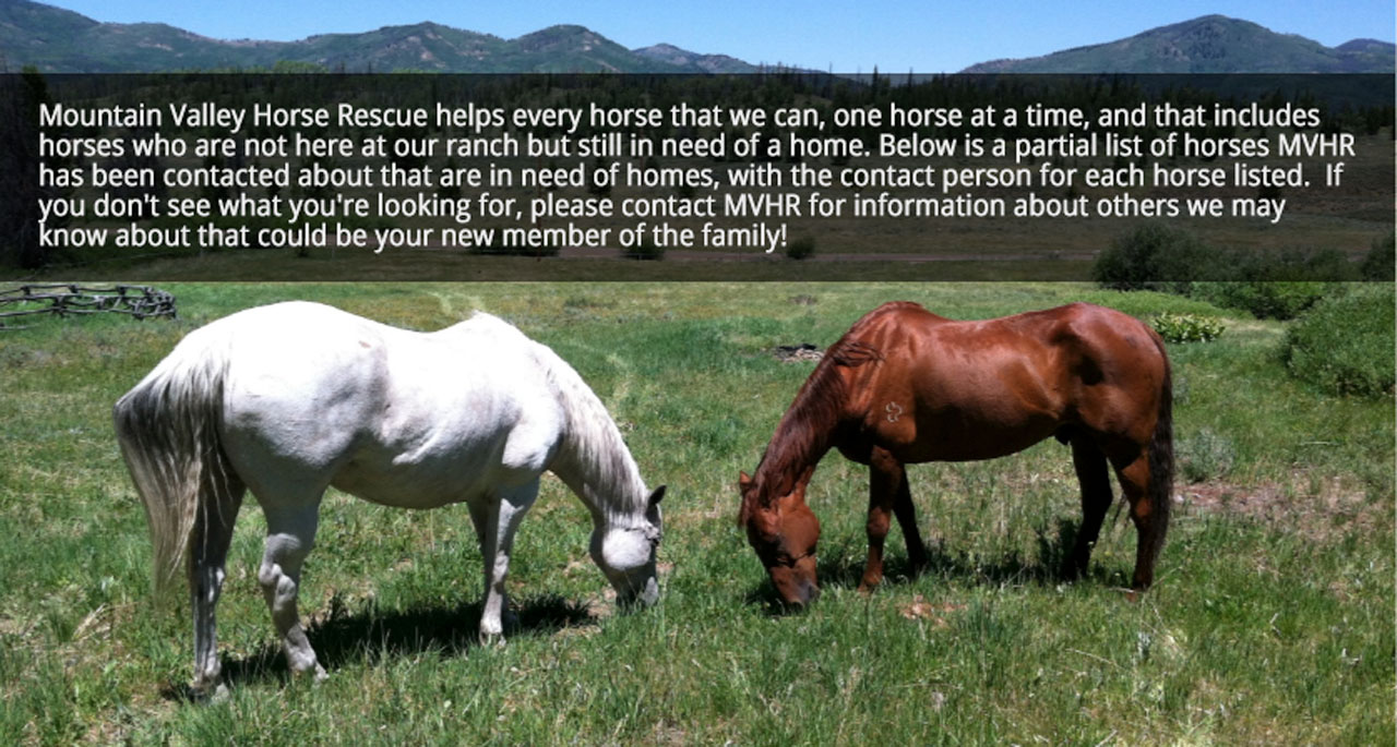 Mountain Valley Horse Rescue helps every horse that we can, one horse at a time, and that includes horses who are not here at our ranch but still in need of a home. Below is a partial list of horses MVHR has been contacted about that are in need of homes, with the contact person for each horse listed. If you don't see what you're looking for, please contact MVHR for information about others we may know about that could be your new member of the family!