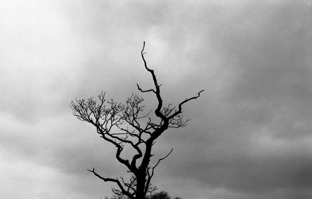 Blackthornwinter-web-24.jpg