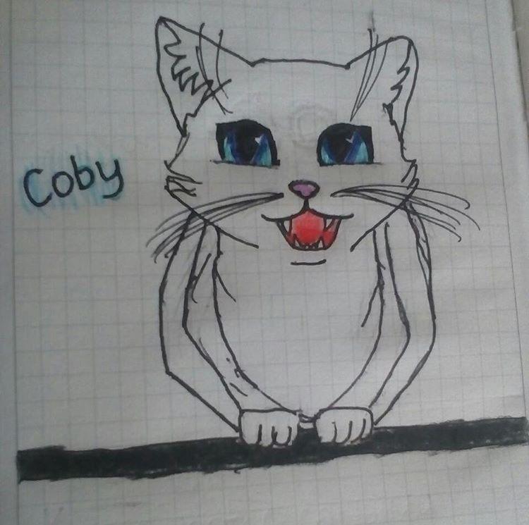 @meow.aza