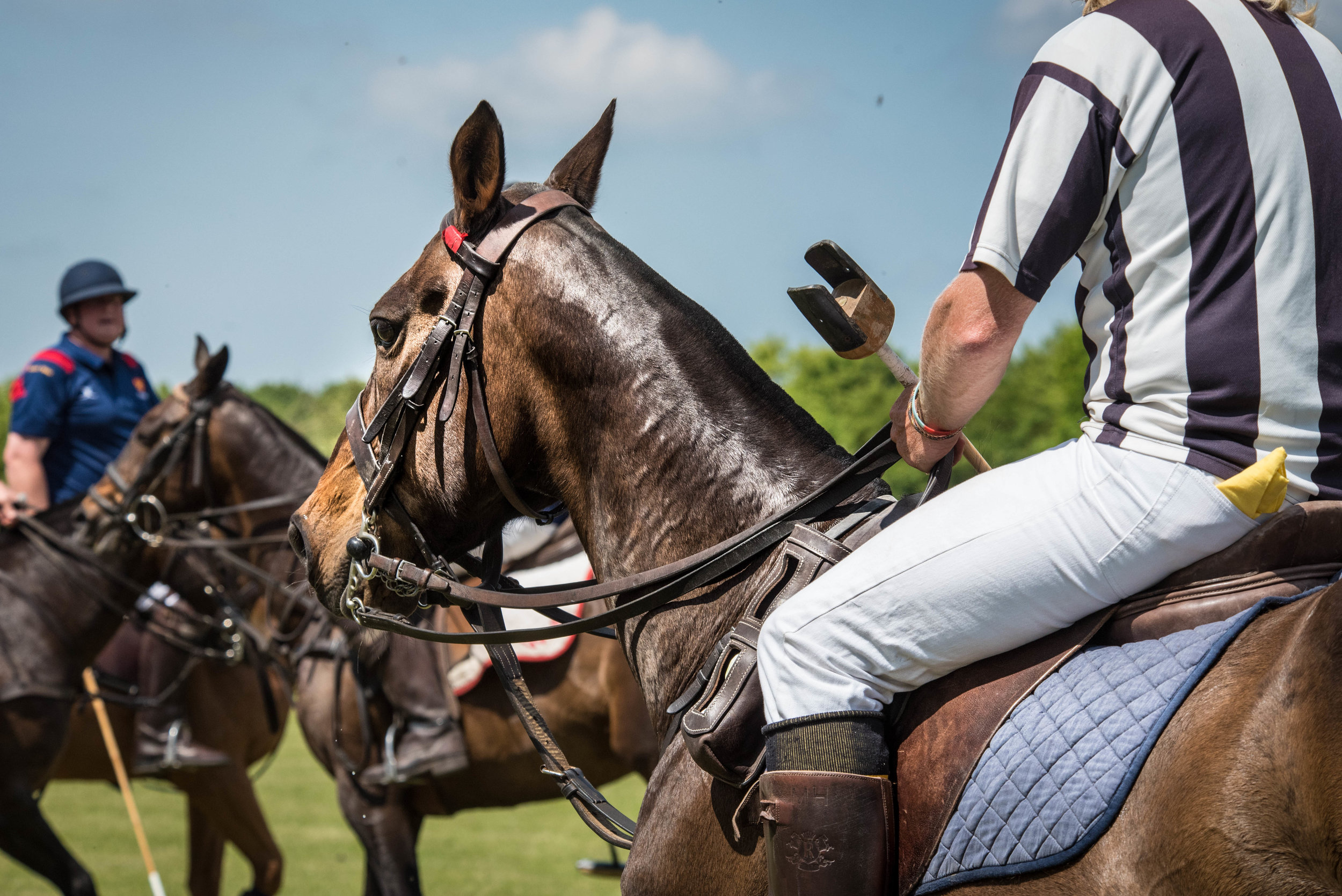 Your summer polo fix. -