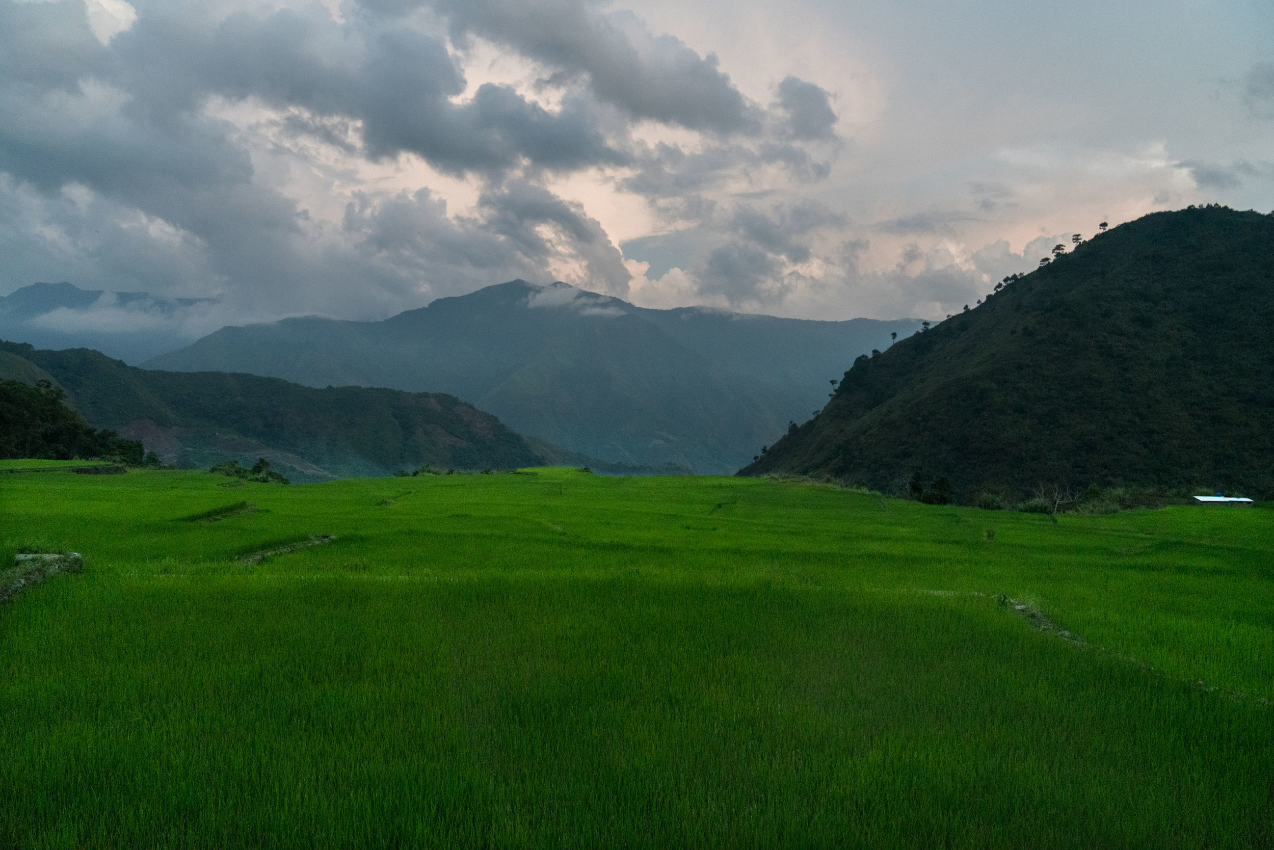 The rice fields take on an intense green at sunset