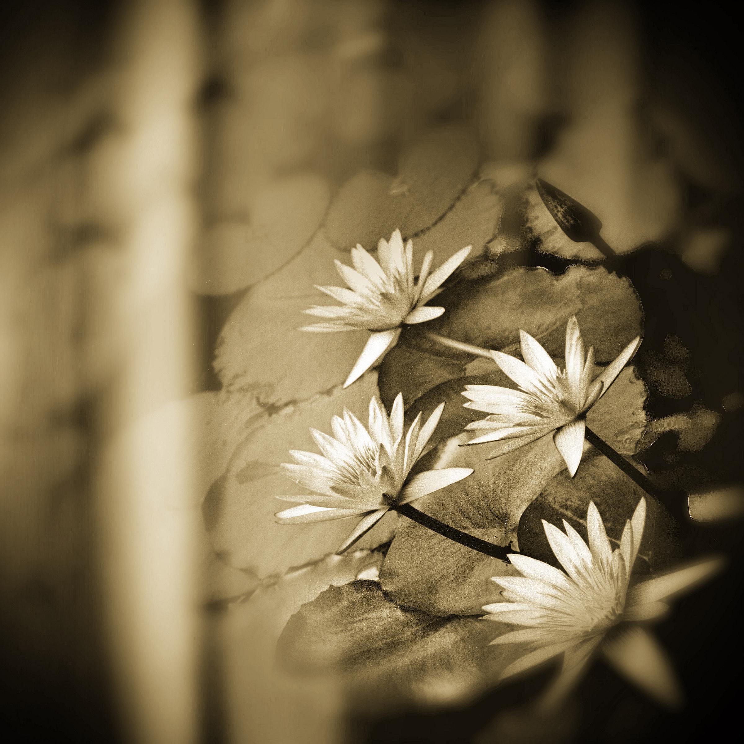 FlowersSquare_c2018_PhotographbyDHDowling.jpg