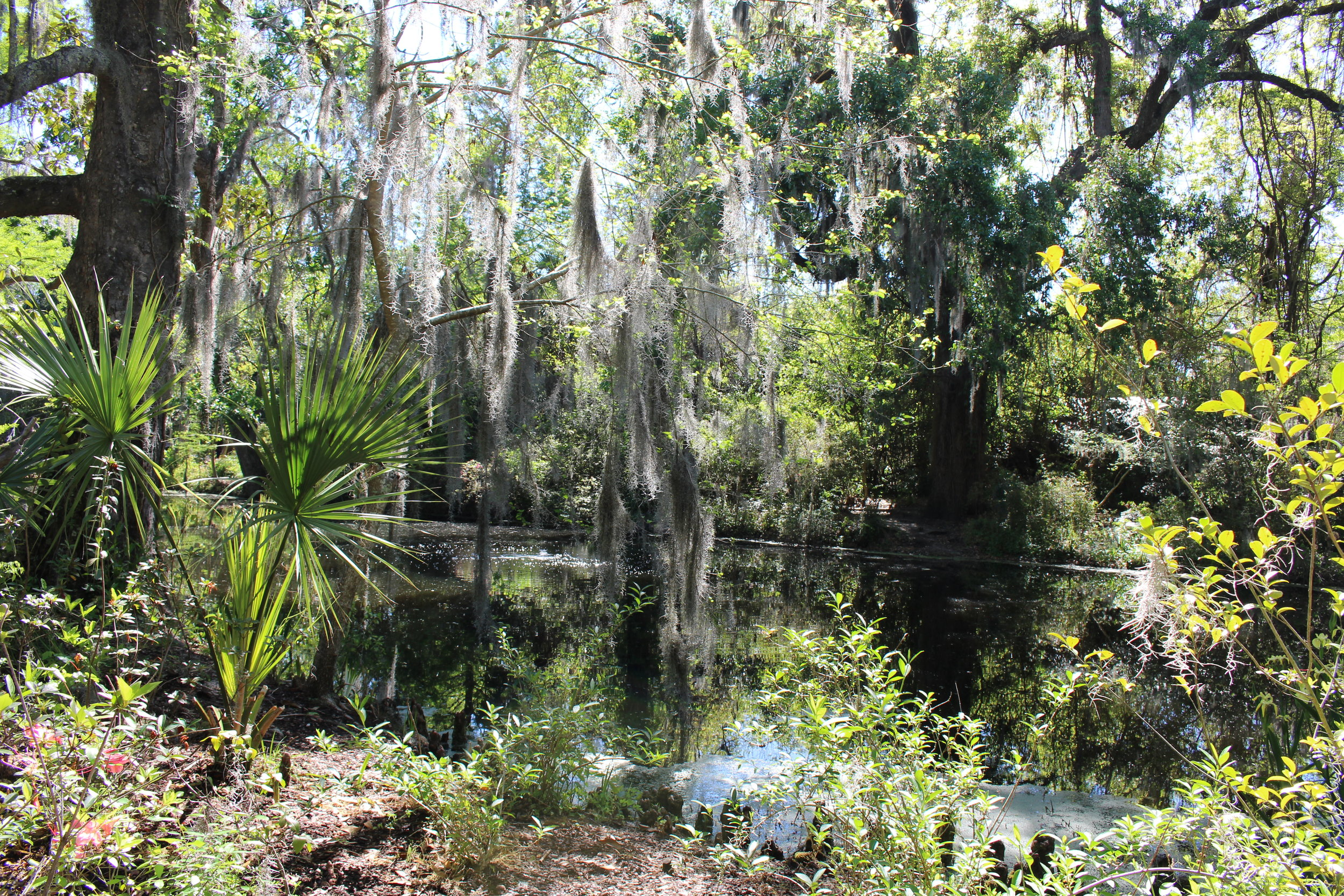 Magnolia Plantation grounds