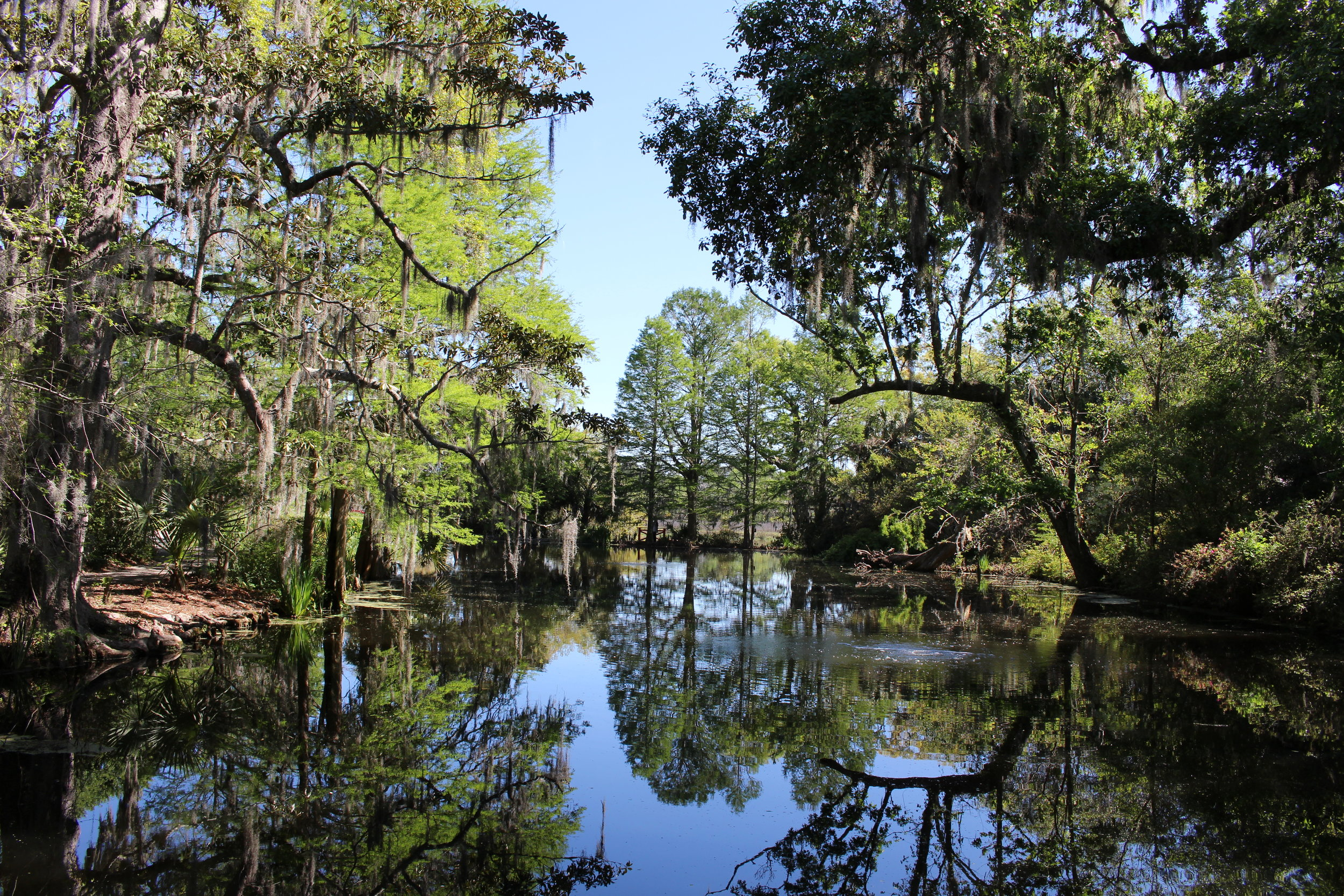 Magnolia Plantation pond