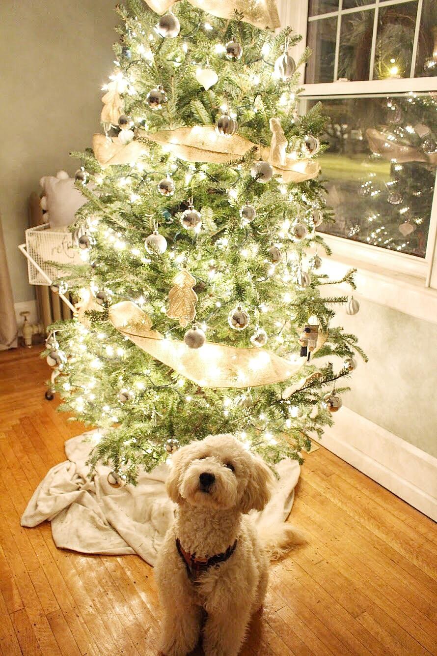 Lights on the christmas tree