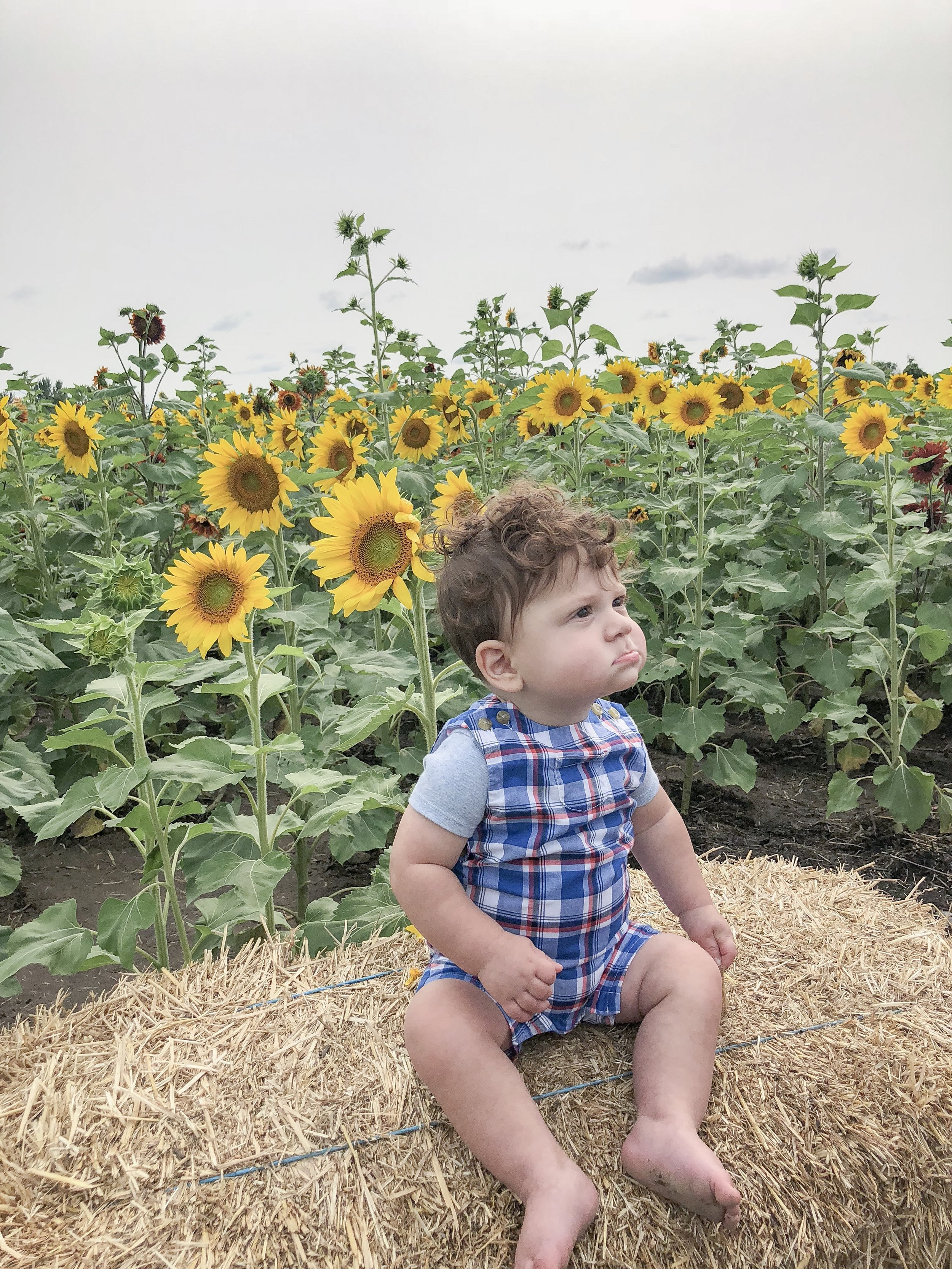 Dominic sitting in the sunflowers