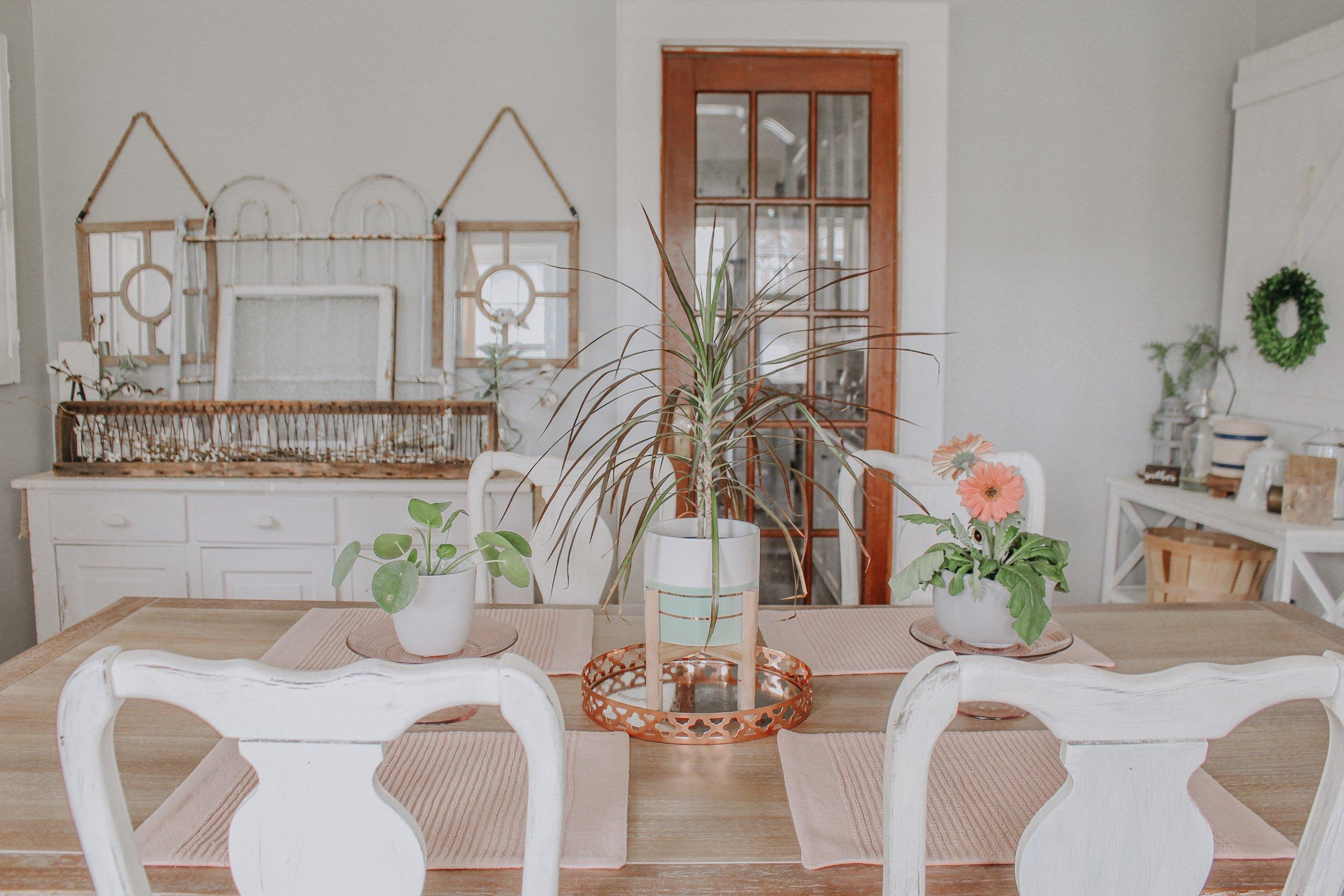 Pilea Plant, Dracaena, and Gerbera Daisy