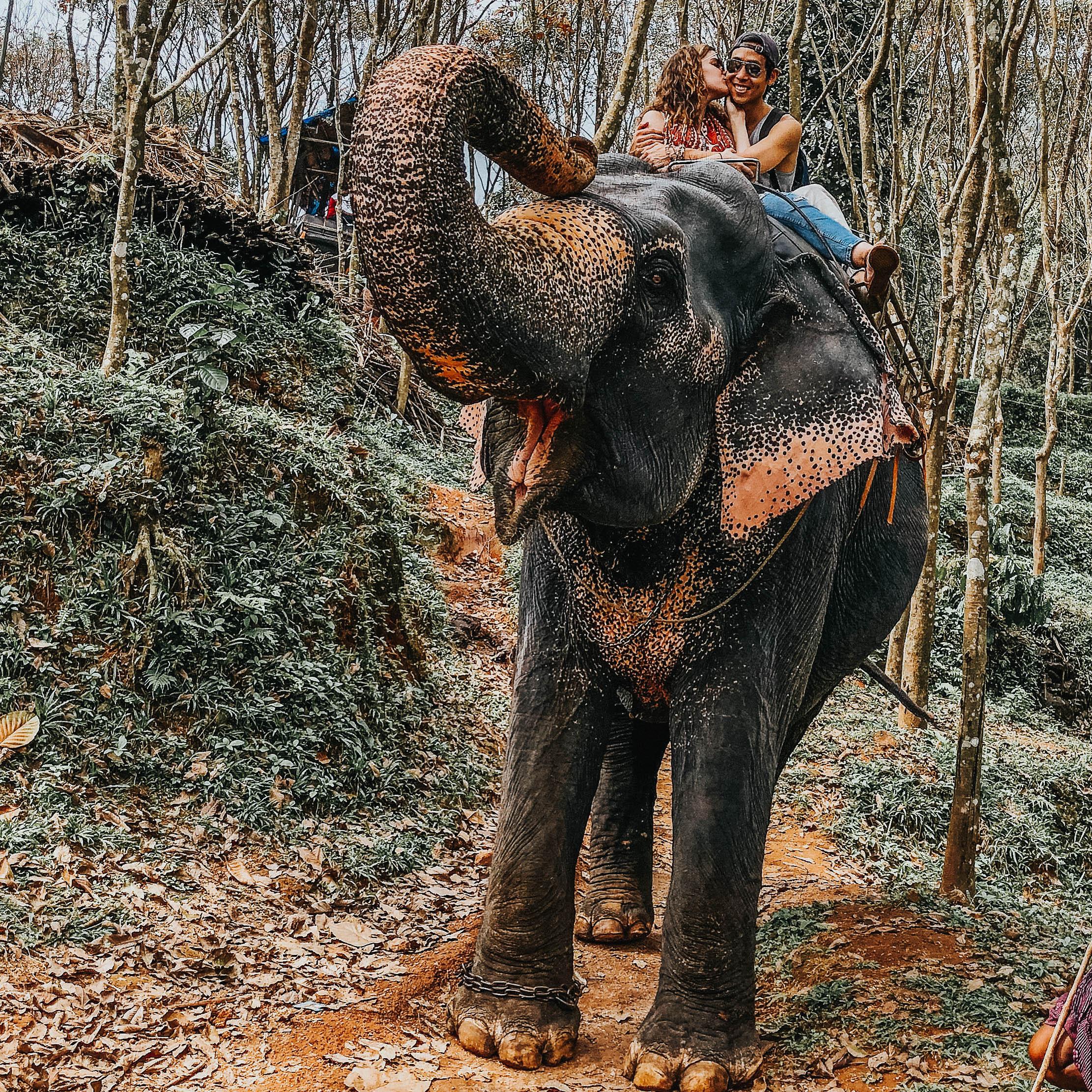 Elephant Garden   Kerala, India