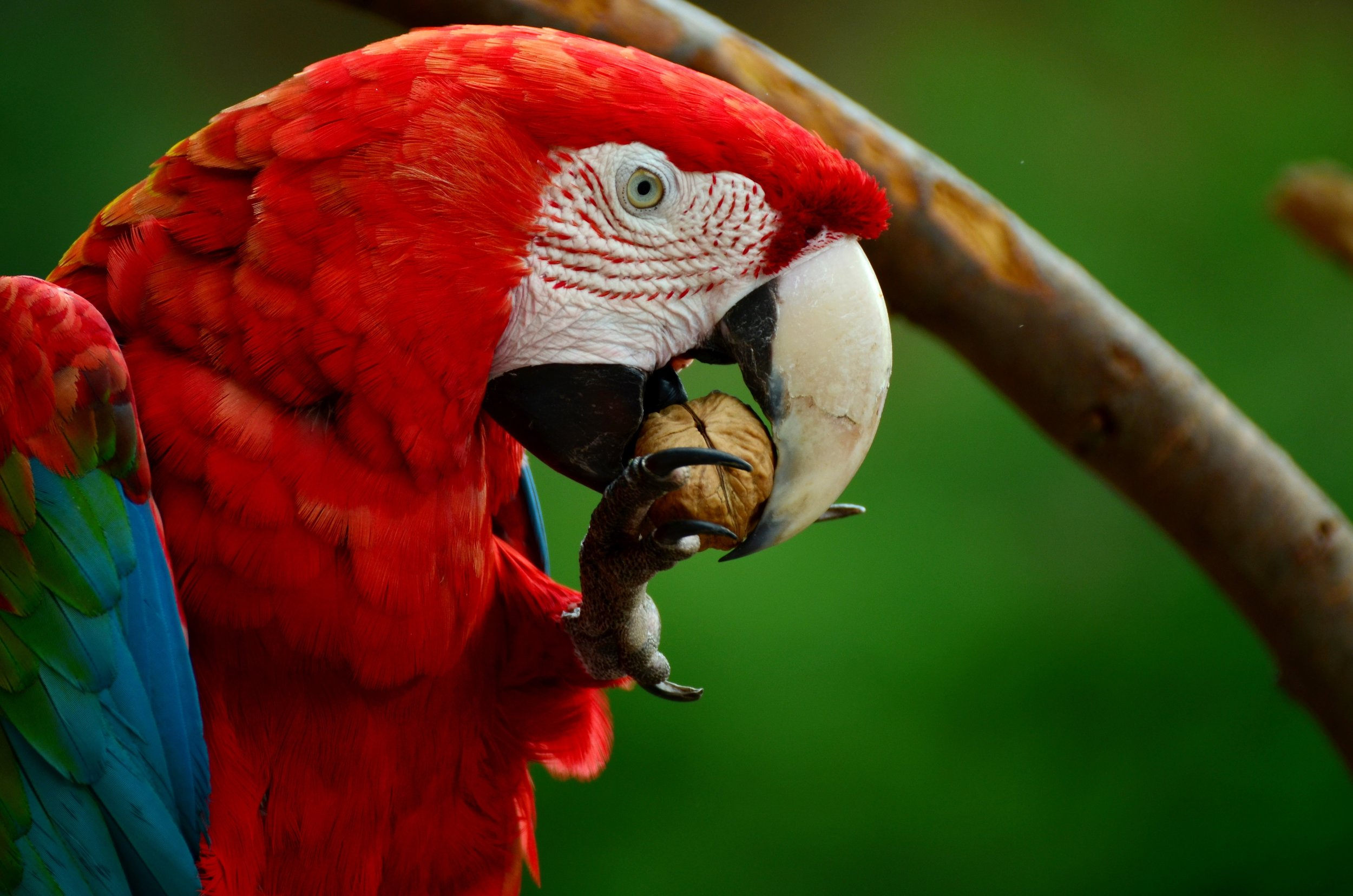 Macaws - Our favorite long tailed colorful friends