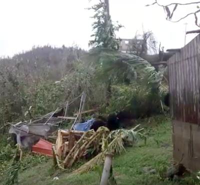 Big Dog Rescue