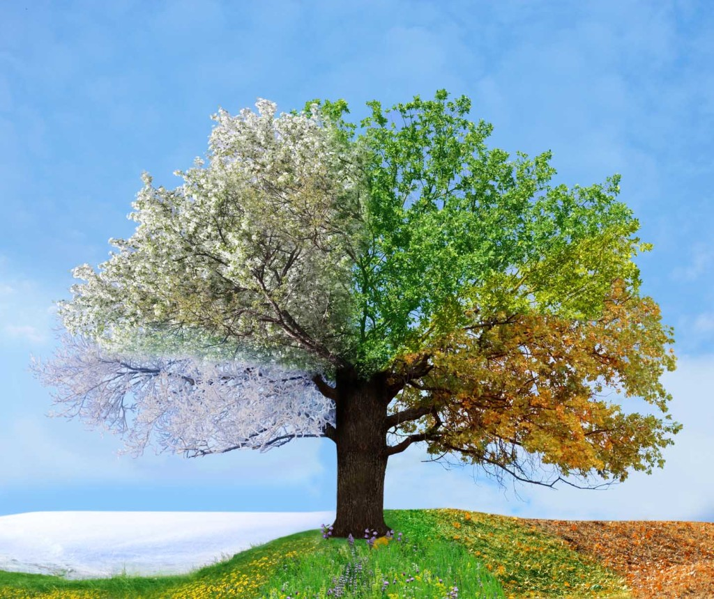 Four-Seasons-Tree
