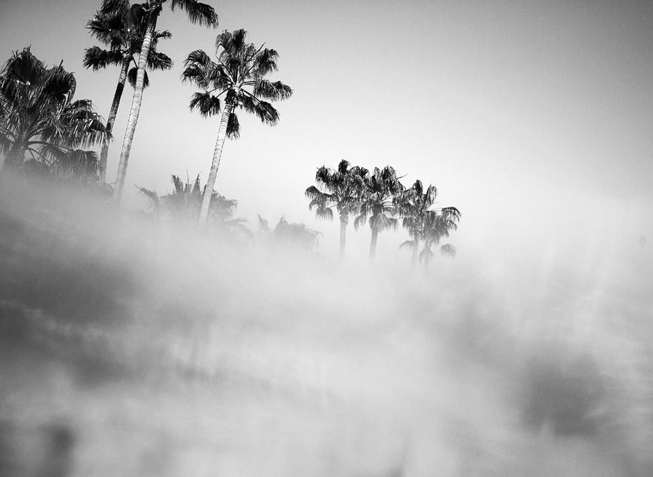 water_palms_b&w_kelseywilhmphoto.jpg