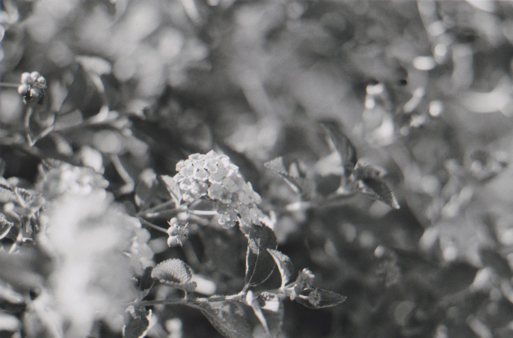 flowerpower_analogue.jpg