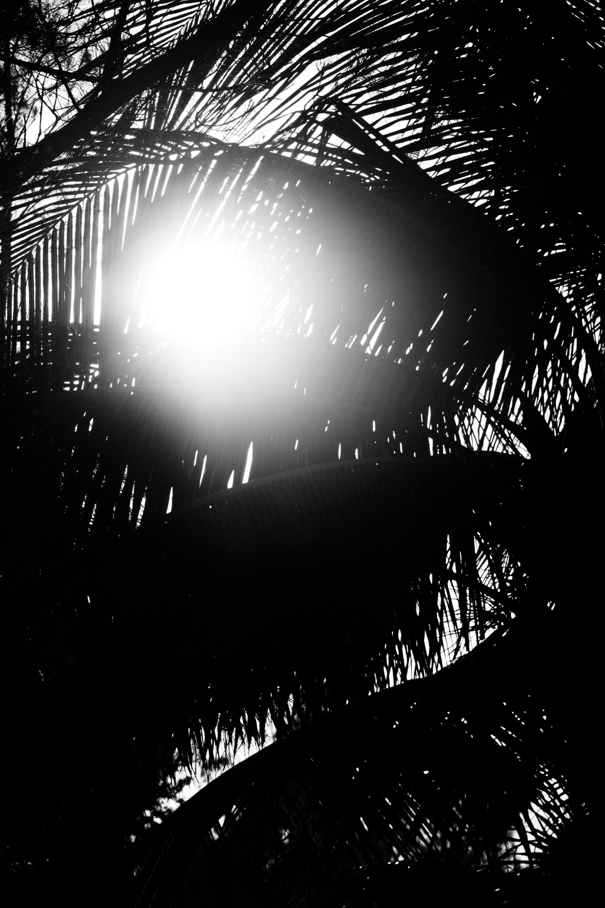 palms_b&w.jpg