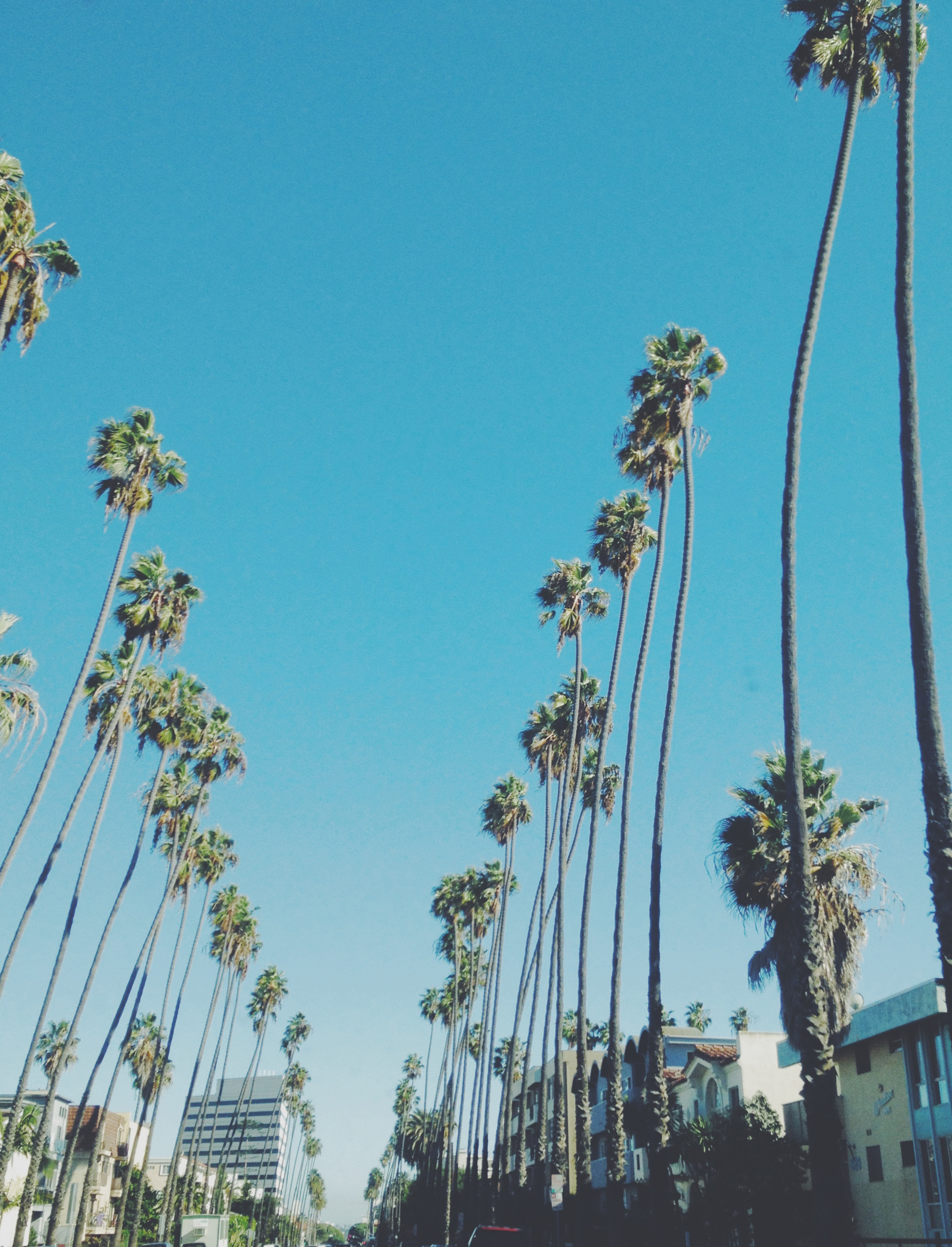 palmsunday.jpg