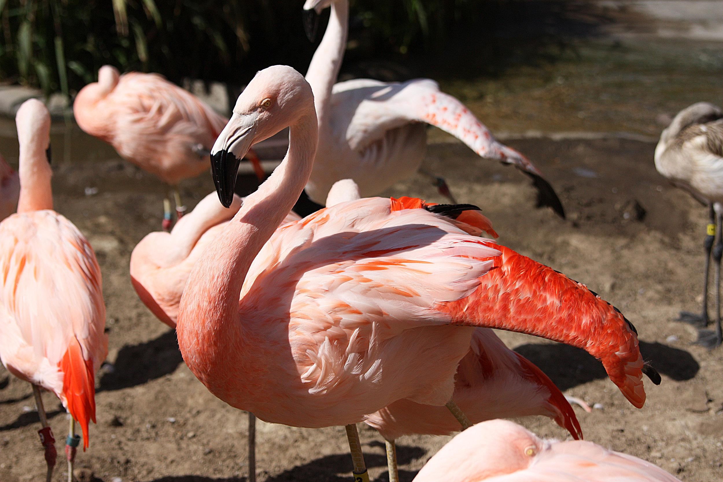 flamingo_kelseywilhmphoto.jpg