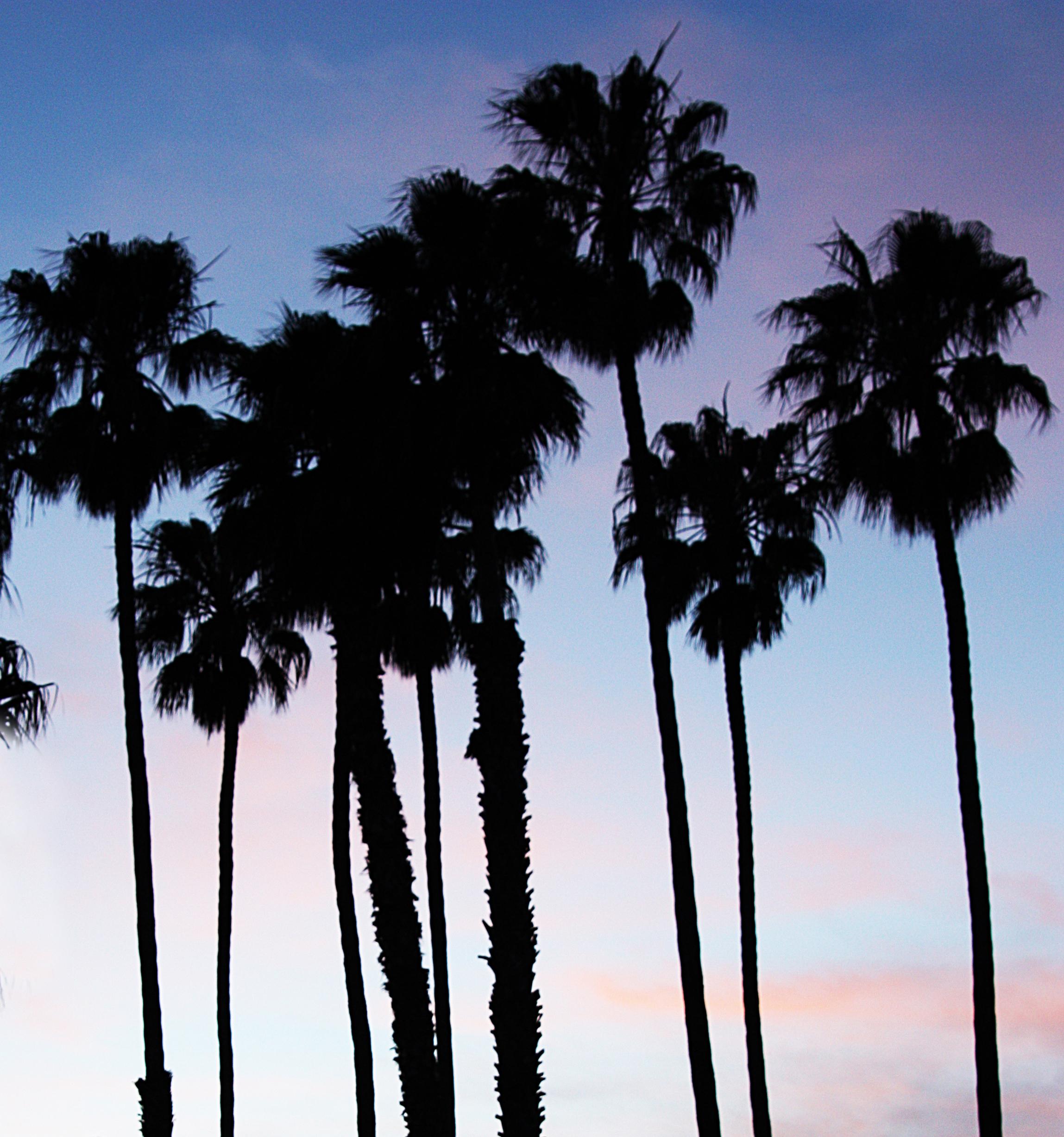 palmspiration_kelseywilhmphoto.jpg