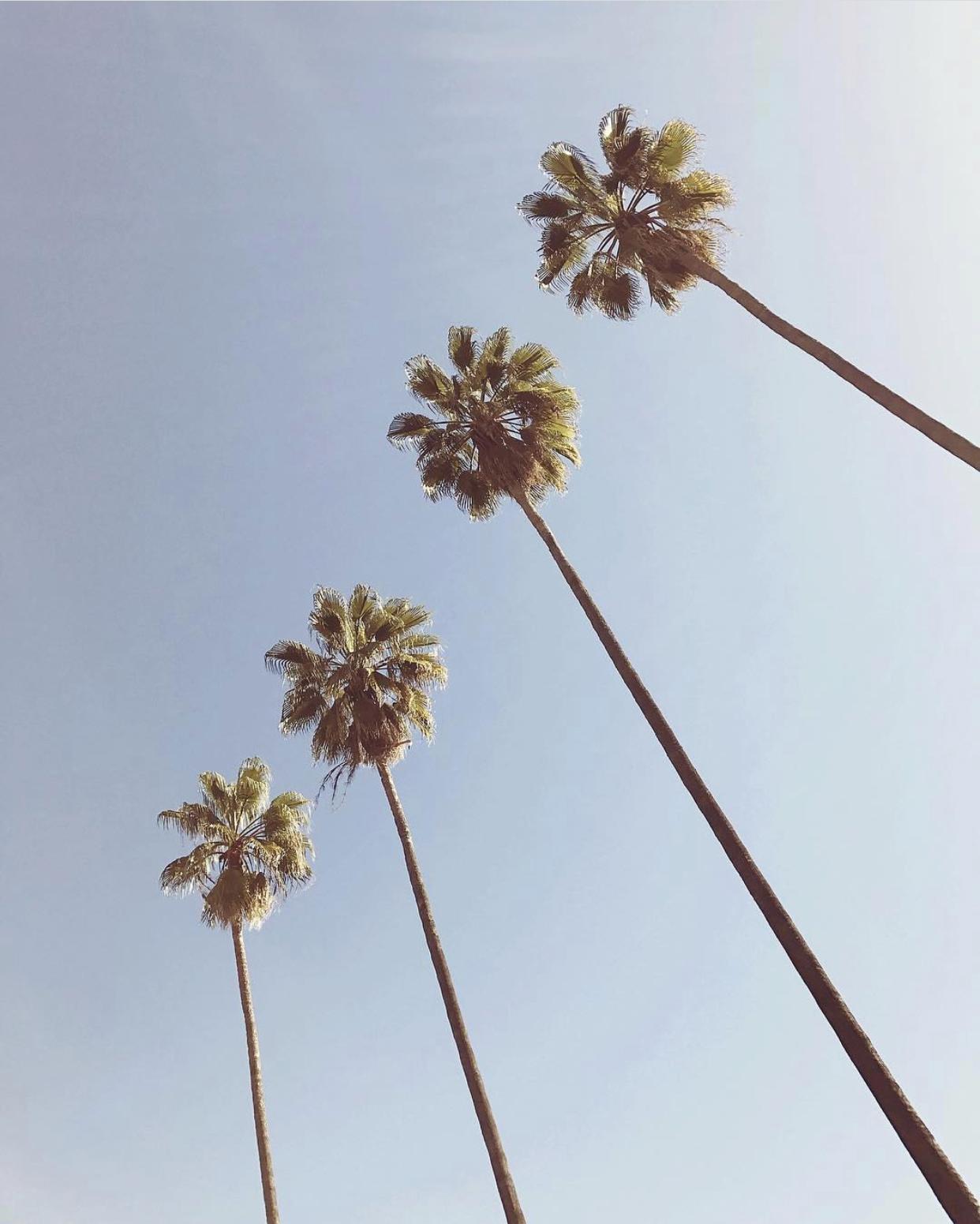 palmspiration.jpg