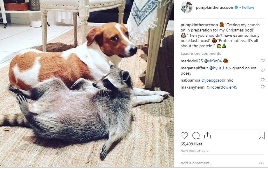 Sometimes they take longer to tilt their head just so. Sometimes they need extra breaks. They can earn up to $15,000 per Instagram post and will pee on the hotel rug without a single care. Not rock stars. Not divas. Not reality TV pseudo-celebs. We're talking pets!