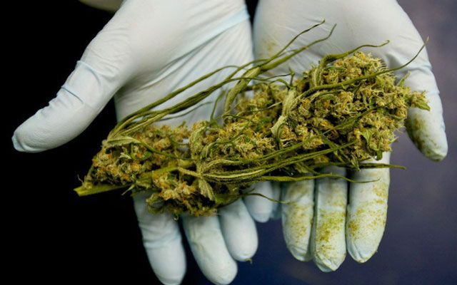 thc-cbd-marijuana.jpg