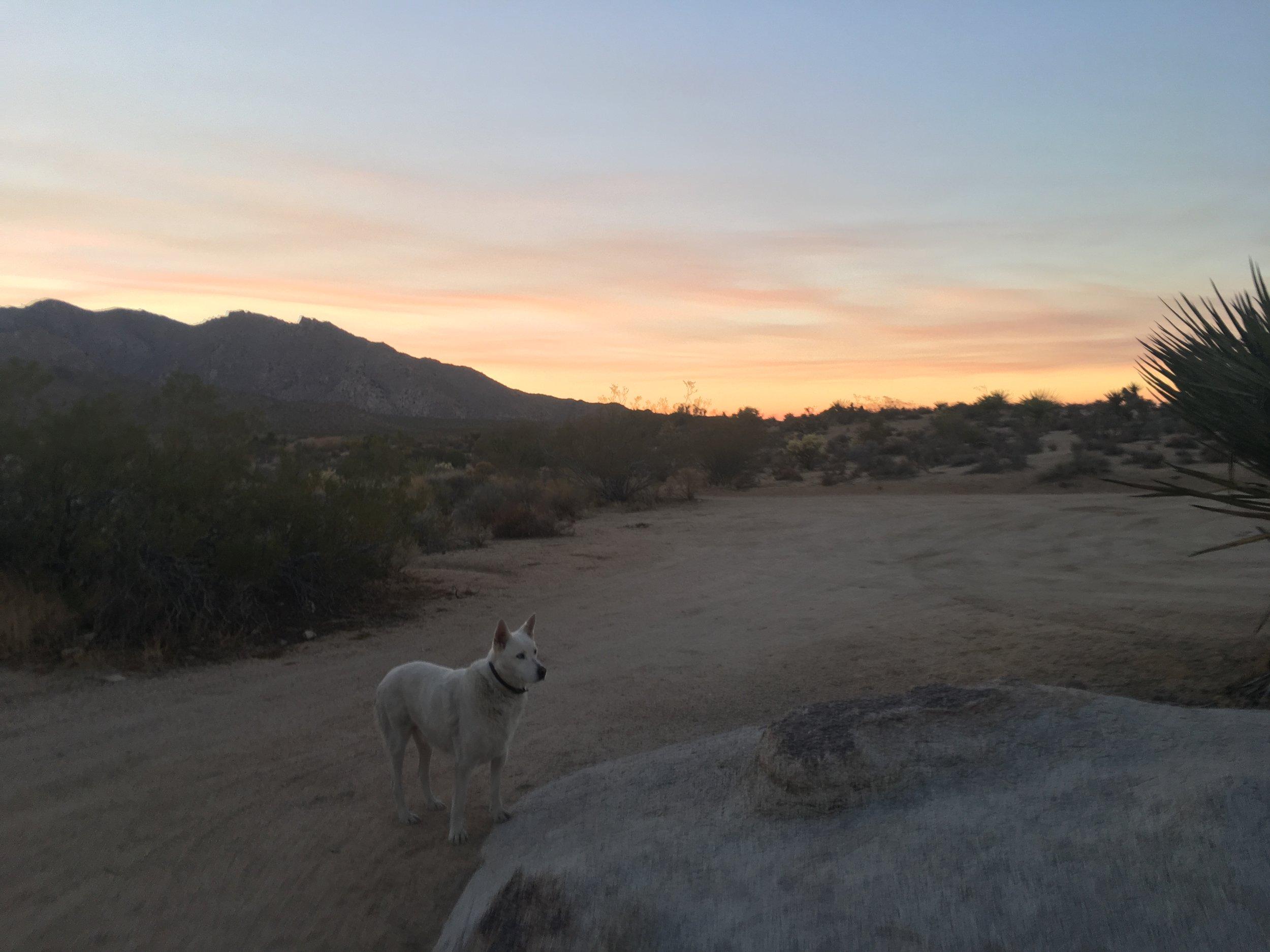 Mia playing watch dog at sunset