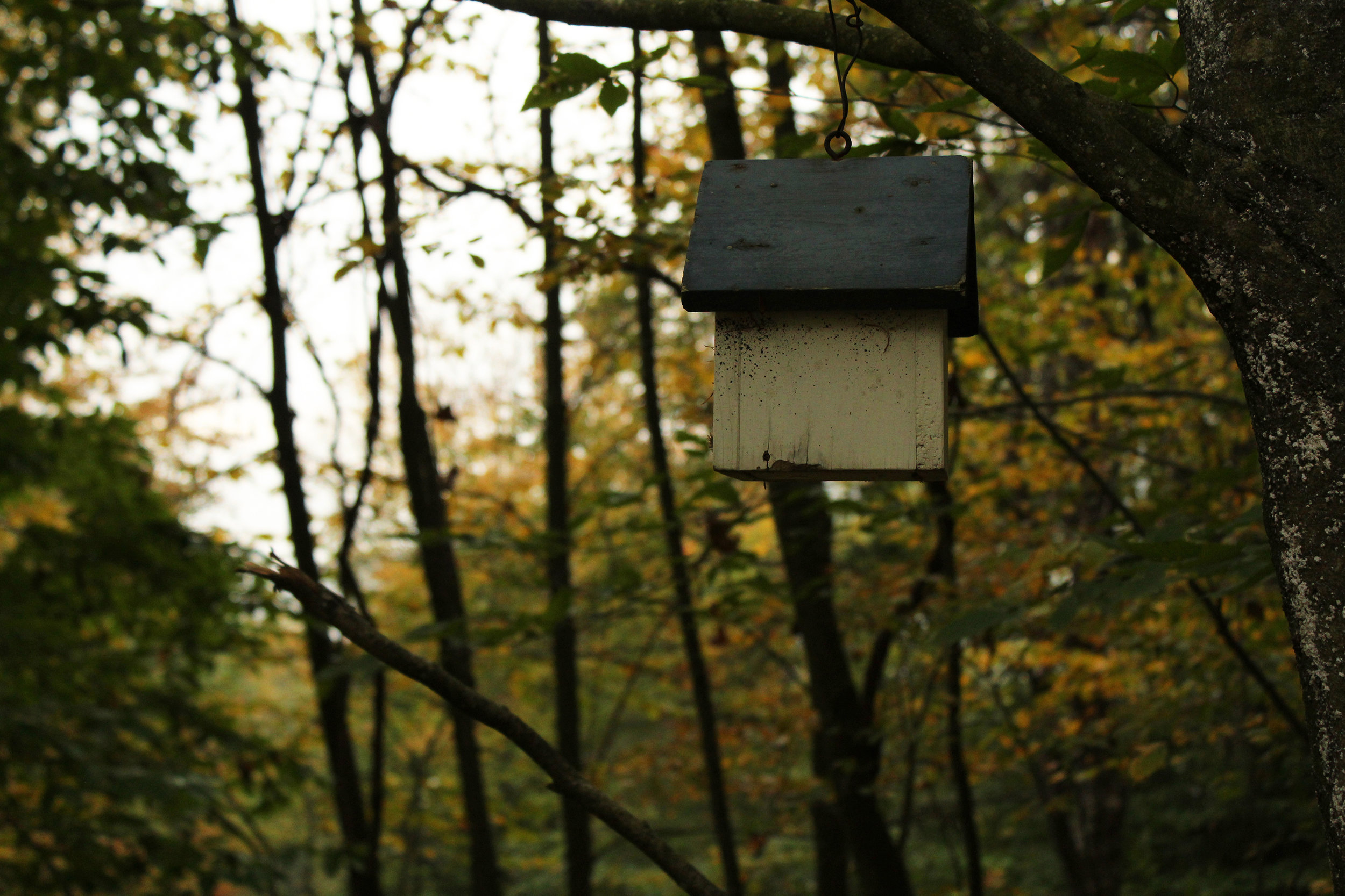 PA_Birdhouse.jpg