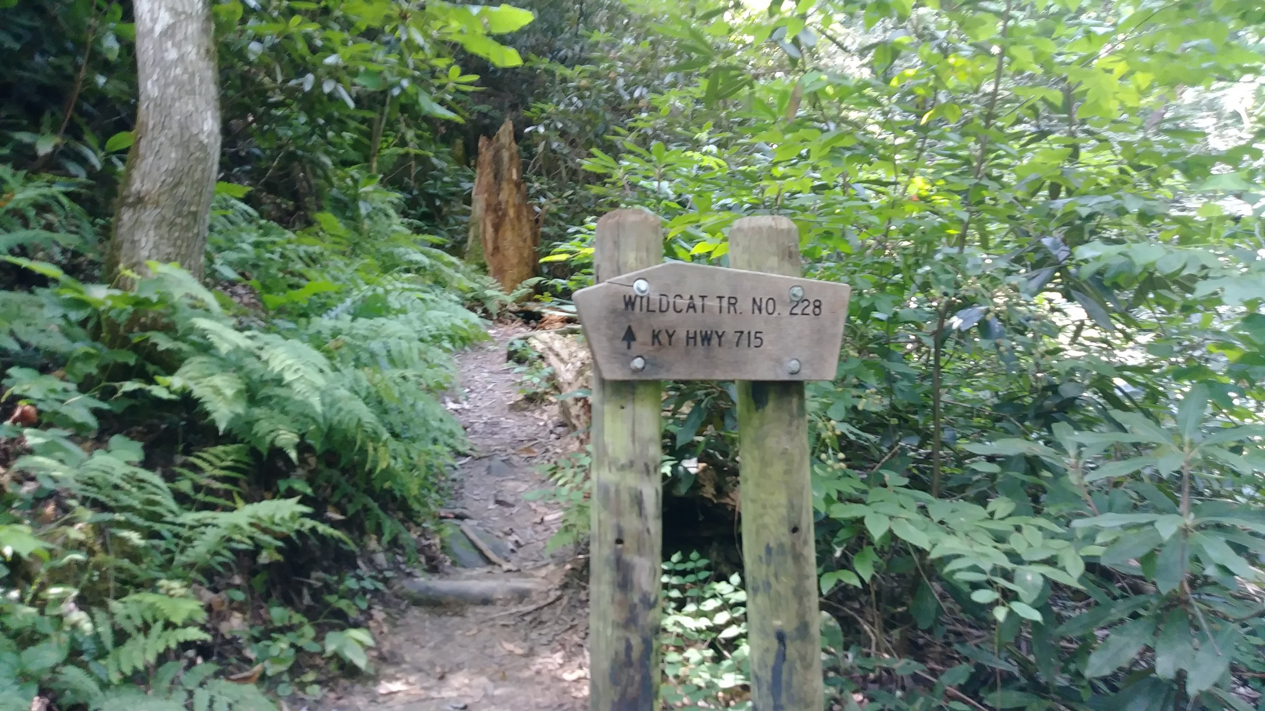 Wildcat Trail sign at the junction with Swift Camp Creek Trail