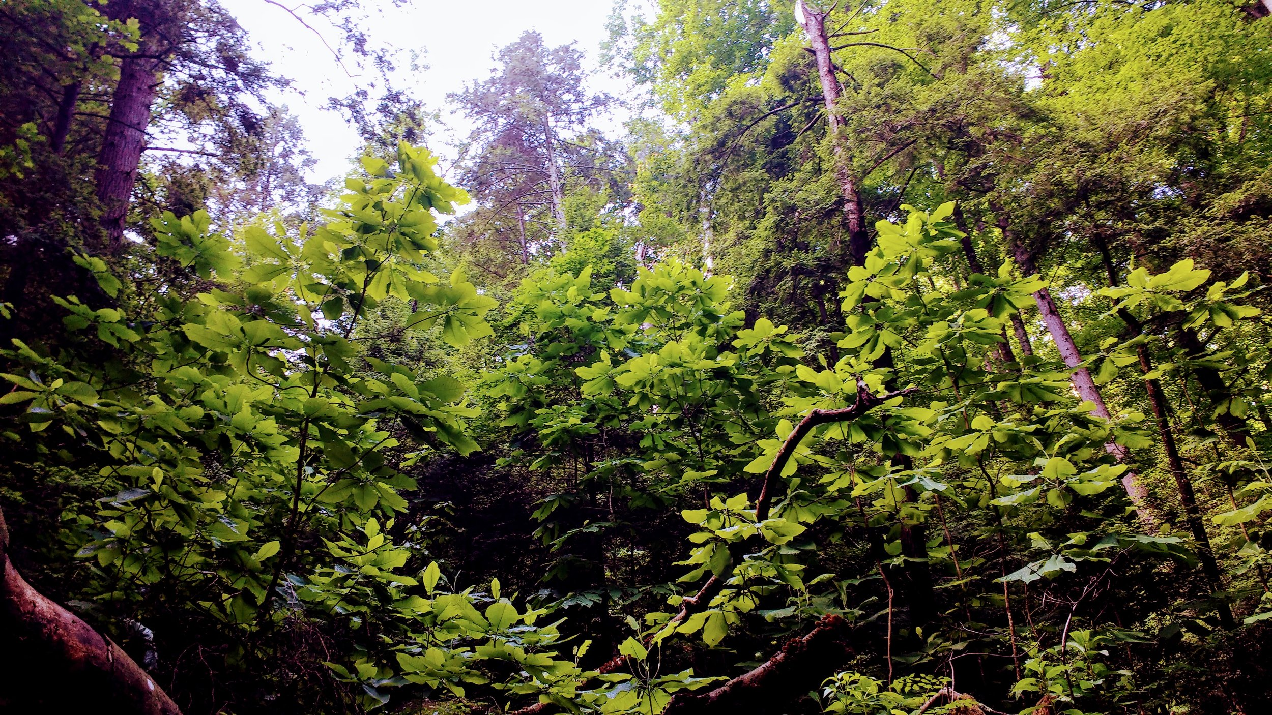 A break in the forest canopy on Sheltowee Trace