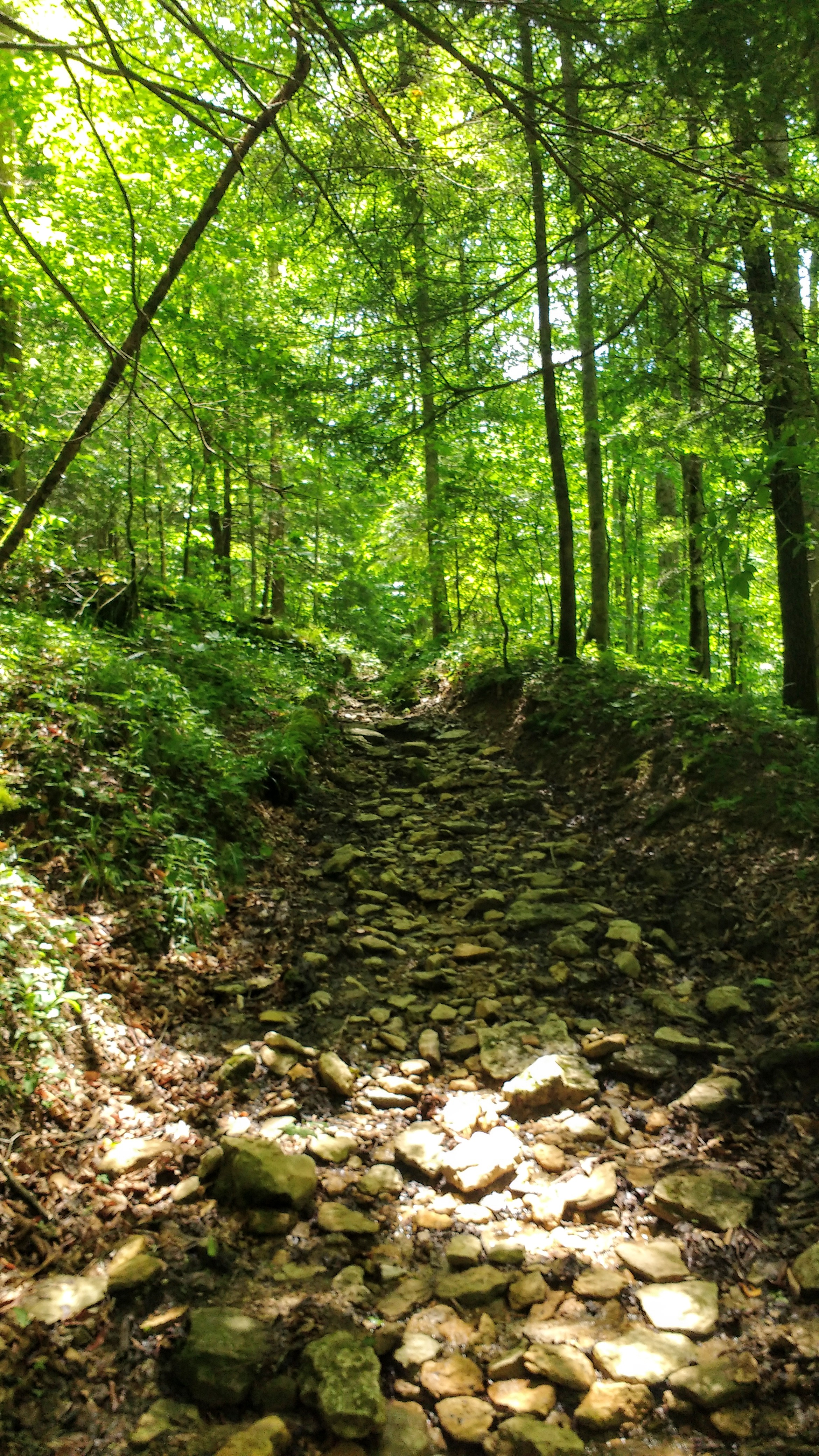 A rocky uphill section on Lost Branch Trail - this is closer to terrain more commonly found on the Appalachian Trail