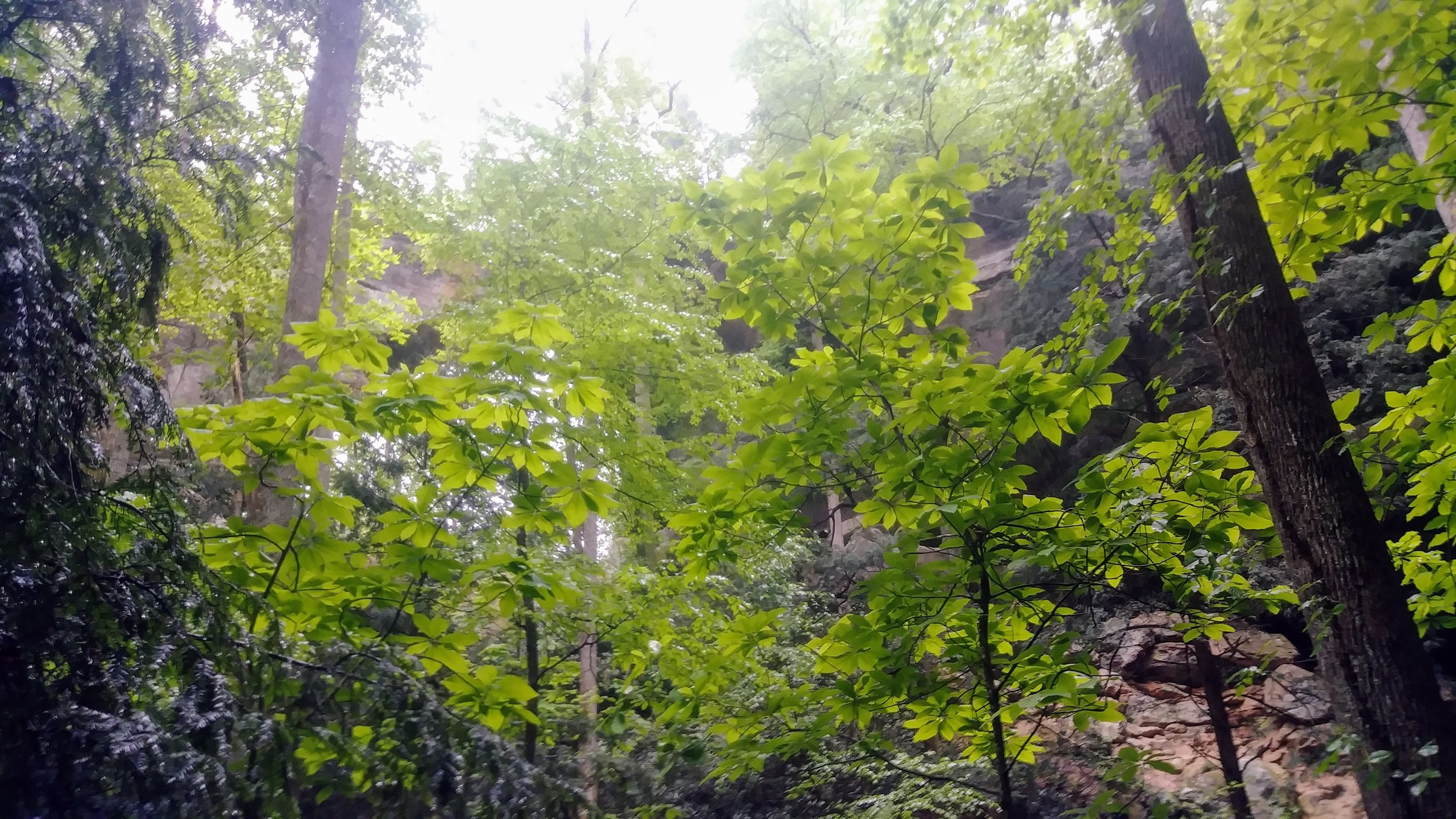 Looking up at Gray's Arch through the trees in Red River Gorge