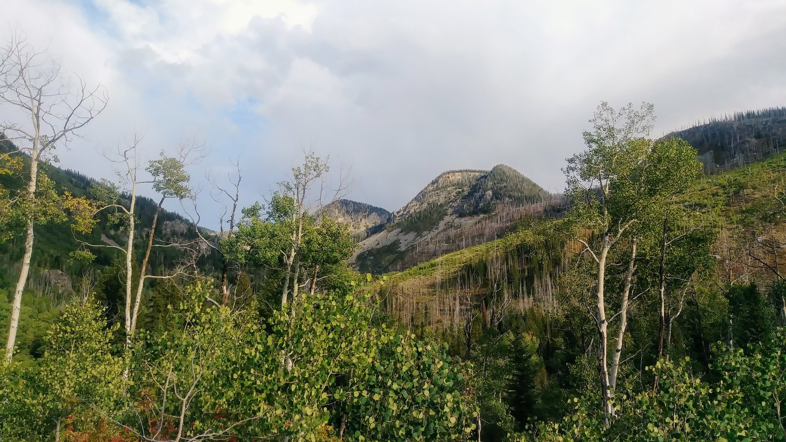Looking back through the Aspens from Gilpin Lake Trail